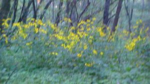 lotsa daisies